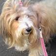 扇風機犬(ミント姫)