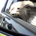 ドライブ中〜!(ミント姫)