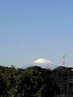 朝の富士山です