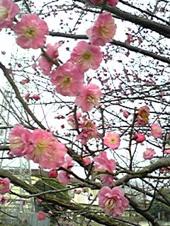 今日のお花〜!