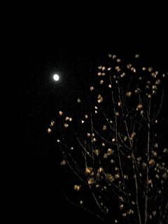 朧月夜(おぼろづきよ)