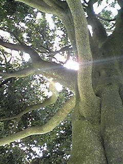 大木の下で…!