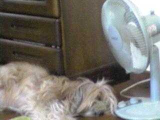 暑い…ので…!