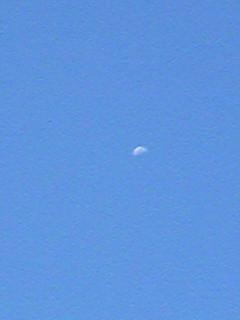 ポーチュラカと朝の月