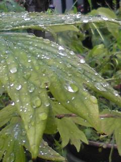 雨の朝…久しぶり〜!