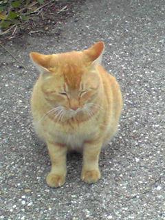 サザンカ(山茶花)と野良猫さん