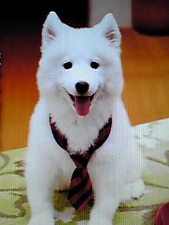 TVドラマ「犬飼さんちの犬」始まりますよ〜♪
