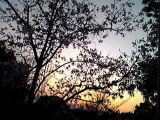 静かな夕焼けを…