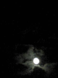 秋のたんぽぽ、淡いベールを纏った月