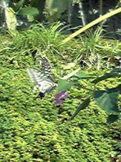 秋の蝶(その2)