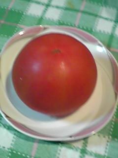 トマトに○○○…変ですかぁ?