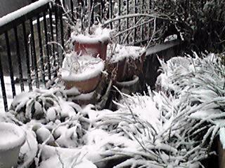 今朝は一面の雪景色です!