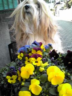 キレイなお花と素敵な青空でし〜♪