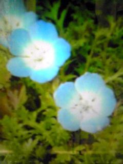 トラメカ→グリーンペーパーの花→何?