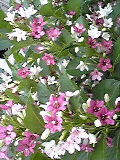 今を彩るピンク系のお花たち