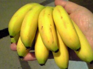 バナナ…ですが…