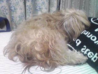 マクラちて寝るのだいちゅきでしゅ〜♪(ミント姫)