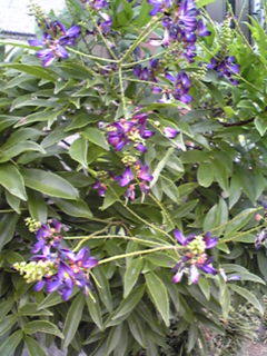 この花の名前知りませんか?