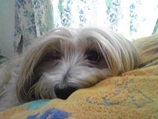 枕が高いんですけど…(ミント姫)