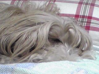 眠い…眠い…寝る…ZZzz。。。