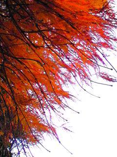 紅葉と冬が一緒にやって来たようです。