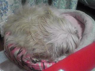 ベッドの中ではダンゴムシミン子です(ミントでしよッ!←byミント姫)