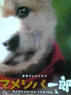 シリーズ「マメシバ一郎」からいろいろ情報一挙にお知らせ〜!!