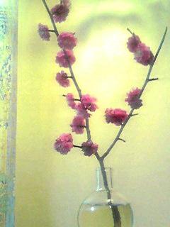 紅梅を一枝