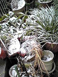 1時はうすっすら積もった雪