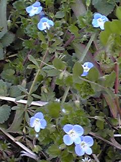 道端の花たち三つ