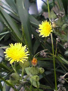 道端に咲く花たち