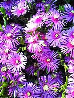 石垣を飾る花
