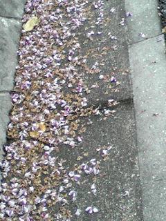 くず(葛)の花の絨毯が出来ていました♪