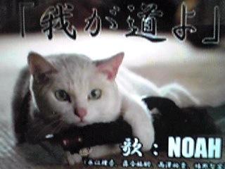 ドラマ「猫侍」主題歌『我が道よ』配信開始されました〜♪