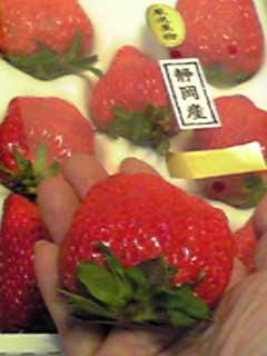毎度のイチゴでございます〜♪フフフ