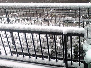 予報は雪マーク一つです(^-^;