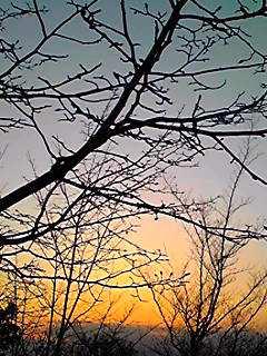 夕焼けに浮かぶコブシの花芽(あと少しだね)