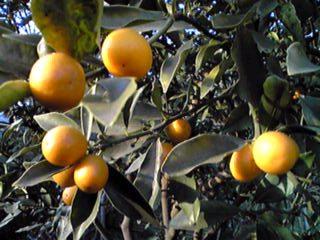 灰色の空だからパァ〜っと明るくオレンジ尽くし♪