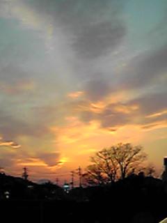 河原からの夕焼けとちょっとぷっくり桜の花芽♪