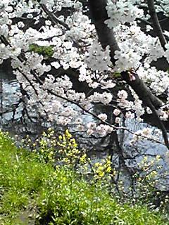 行ってみよう〜!2014年4月の直さん(高橋直純)です!(花満開の直祭り〜♪)キラ〜ン☆
