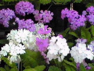 可愛いお花がニコニコワイワイ♪