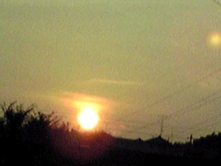 真っ赤な夕日とモントプレチア(姫檜扇水仙)