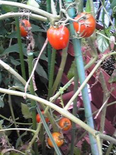 庭は更にジャングル状態に成ってます(ノ><)ノ
