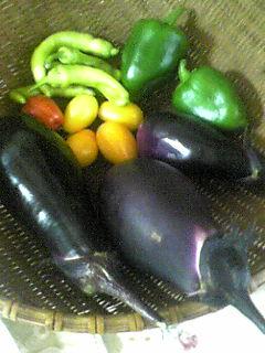 今日の収穫をしっかり夕飯に!