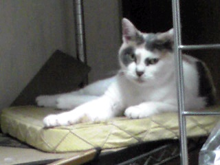家猫ニャー姫は甘えっ子
