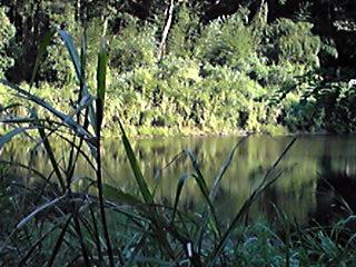 今夜も里山公園の癒される風景