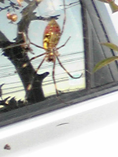 「クモノイト」は聴けるけど、蜘蛛の糸は写らなかった。。(笑)