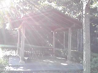 朝日、木漏れ日…心安らぐそのひと時