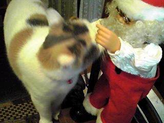 サンタさんも戸惑ってるかもね?(笑)