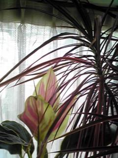 今の時期、朝の深呼吸はこの窓辺で…(^ー^)